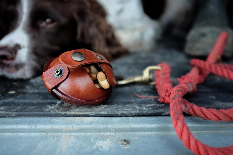 Dog Pod in car boot.